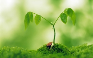 nature-wallpapers-plant-growth-wallpaper-wallpaper-33574