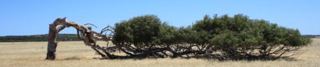 bendedtree