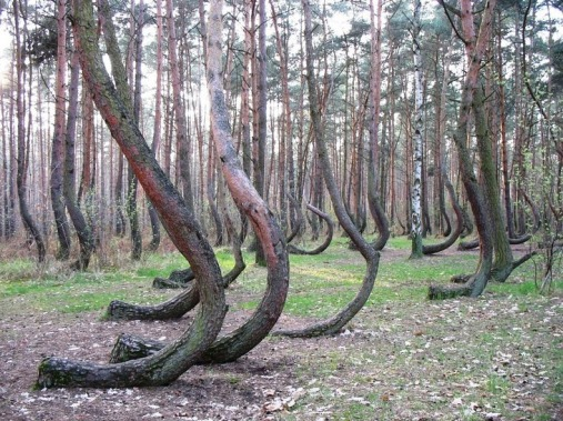 crooked-forest-4[2]