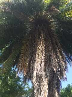 Cayman Botanical Garden
