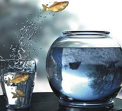 goldfishleap
