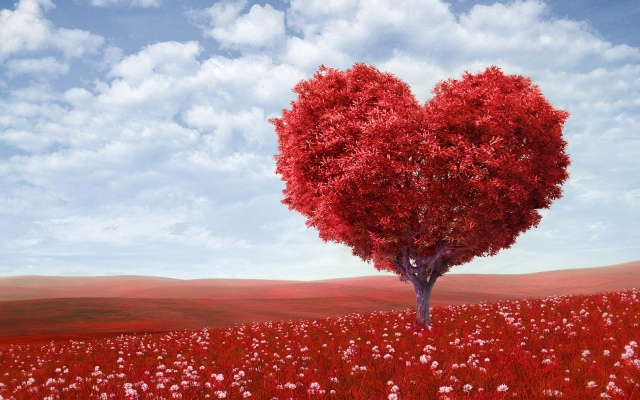 red_love_heart_tree-wide.jpg