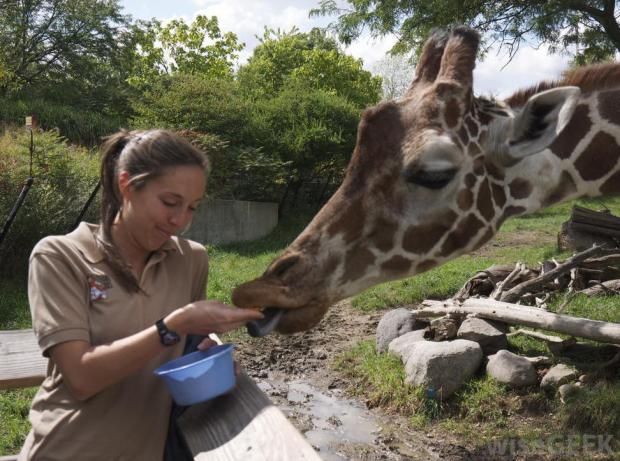 woman-feeding-giraffe