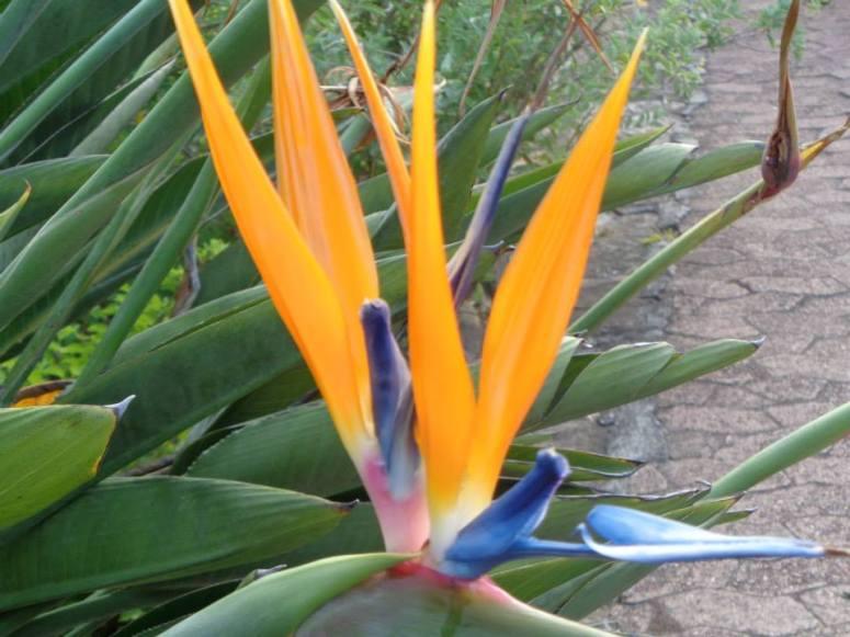 Mandela Birds of Paradise