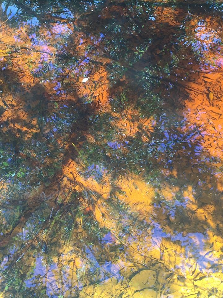 reflection of leaves (Nov. 2015 -- honeymoon)